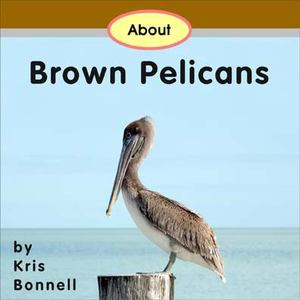 About Brown Pelicans