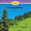 About Evergreens