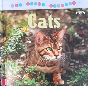 ALL ABOUT ANIMALS - CATS